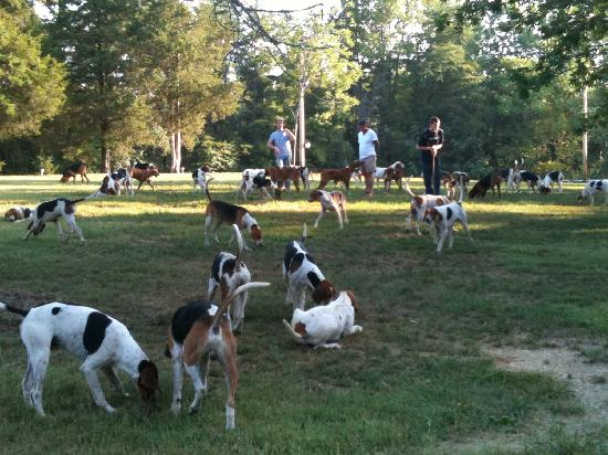 Keswick Hall: Running of the hounds!