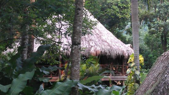 Villas Pico Bonito: Our Tree house