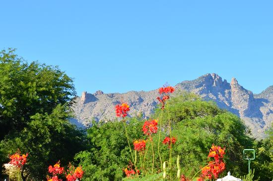 Westin La Paloma Resort and Spa: view from Azul restaurant patio