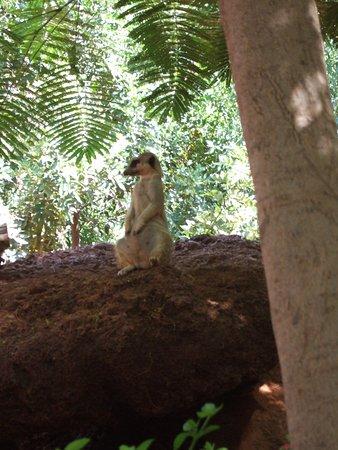 Barcelo Fuerteventura Thalasso Spa: Oasis park