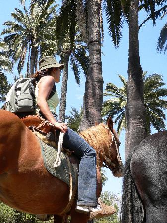 Reserva Ecologica Oasis de la Campana: Horse Back Riding