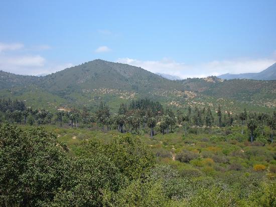 Reserva Ecologica Oasis de la Campana: Panoramic view of Oasis de la Campana