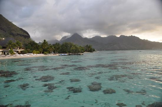 Hilton Moorea Lagoon Resort & Spa: The water is so clear we even got pictures of fish from the deck!