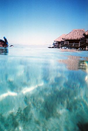 Hilton Moorea Lagoon Resort & Spa: Just imagine yourself here in this warm water right now...