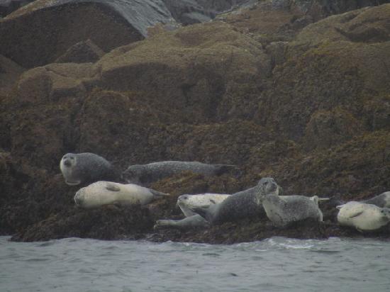 Lulu Lobster Boat: Harbor Seals