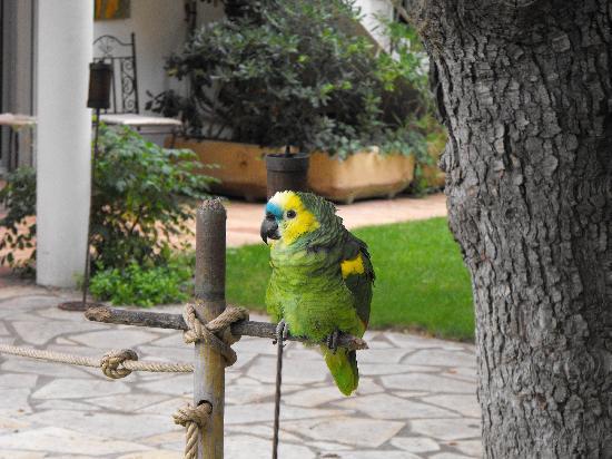 Villa Lantana: The resident parrot
