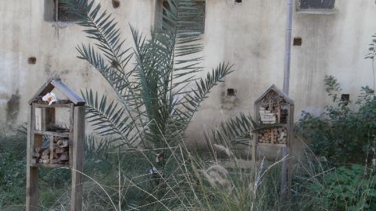 Jardin Jnan Sbil : jnan sbil