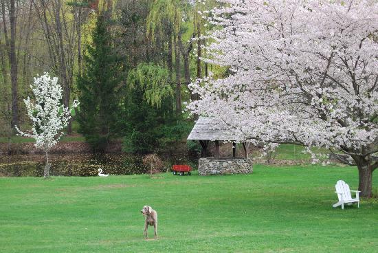 ذا إن أو ذا هورس فارم: Spring is Here!