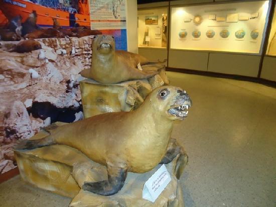 Lorenzo Scaglia Municipal Museum of Natural Sciences: 10- Museo Lorenzo Scaglia .