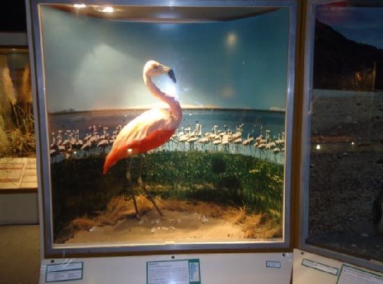 Lorenzo Scaglia Municipal Museum of Natural Sciences: 6- Museo Lorenzo Scaglia