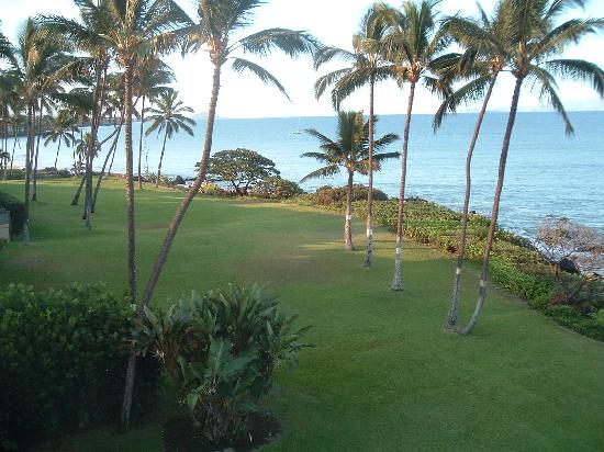 Punahoa Beach Apartments: The immediate grounds as seen from the Lanai