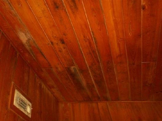 Old Saltworks Cabins: MOLD