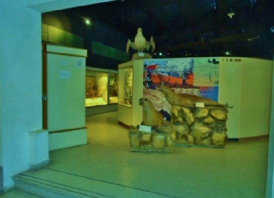 Lorenzo Scaglia Municipal Museum of Natural Sciences: Museo ciencias Naturales  Mar del Plata