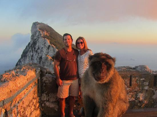 Apes Den: Monkeys everywere