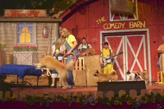 Comedy Barn: Dog tricks