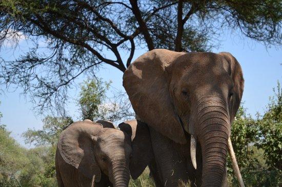 Tarangire National Park, แทนซาเนีย: mom and babe
