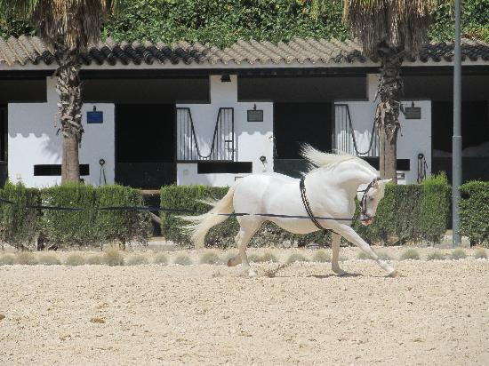 Fundación Real Escuela Andaluza del Arte Ecuestre: Beautiful Andalusian Horse in Training