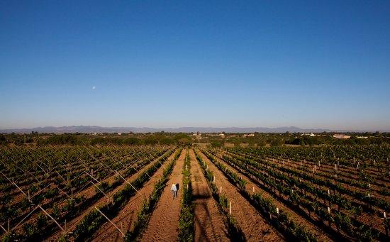 Vinedos Cuna de Tierra