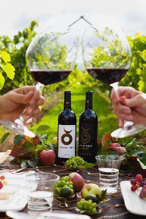Vinedos Cuna de Tierra : Disfruta de una comida privada en nuestros viñedos
