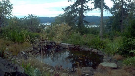 Adytum Sanctuary: koi pond