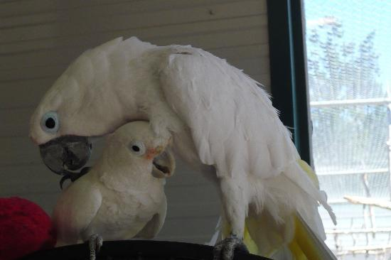 World Parrot Refuge: Grooming time
