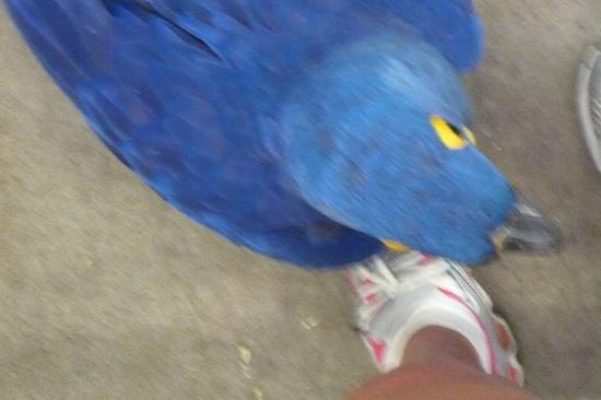 World Parrot Refuge: Get off my turf or I'll peck your feet