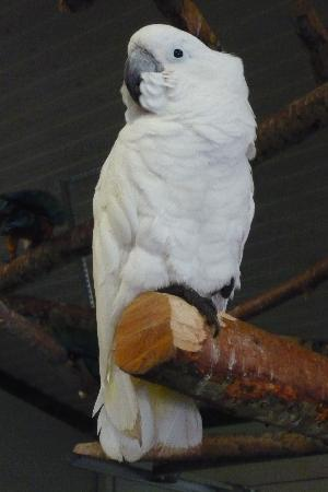 World Parrot Refuge: Lots of space to fly or perch