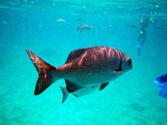 Cozumel Tours: Big fishie!
