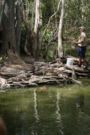 Hartley's Crocodile Adventures: Fresh Water Crocodiles.