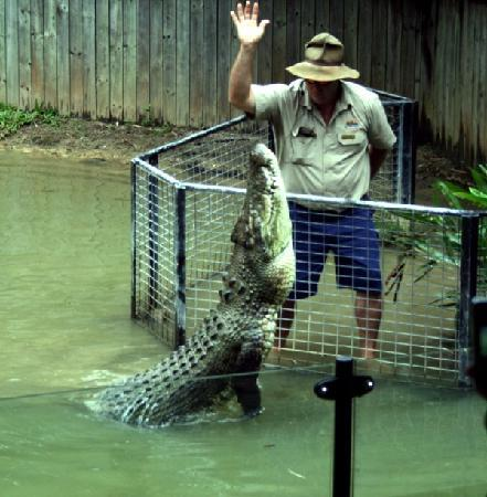 Hartley's Crocodile Adventures: Wonderful croc show!
