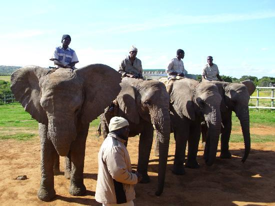Kwantu Private Game Reserve - Day Visits: Handlers on the elephants