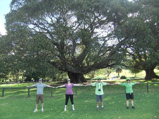 Bike Buffs - Sydney Bicycle Tours: Fig Tree Botanical Gardens
