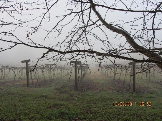 Cedar Creek Cottages & Wine: Early morning in the Vineyard