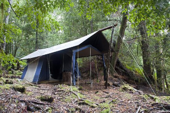 Tarkine Trails - Tarkine Rainforest Retreat: Twin share safari tents dotted throughout the forest