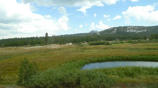 Tuolumne Meadows and stream