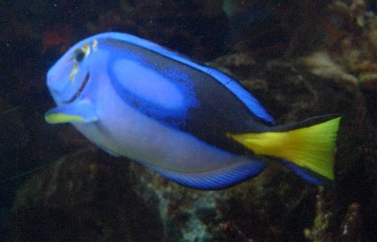 Rainforest Café: magnifique aquarium
