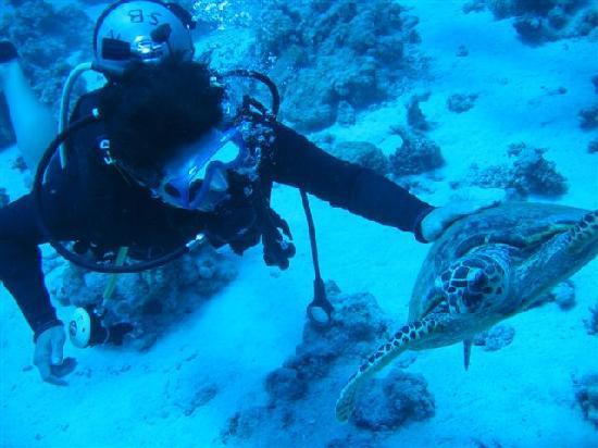 Scuba Hurghada Diving Center: Turtle!