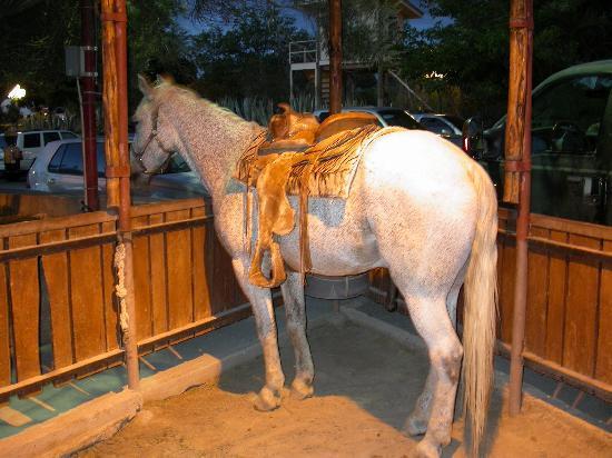 Cattleman's Steakhouse Indian Cliffs Ranch: horses