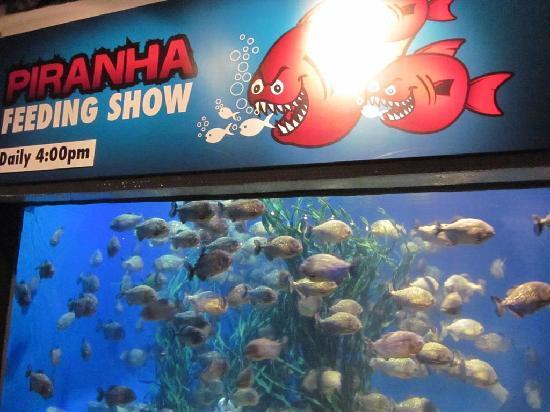 Aquaria KLCC: Piranha Aquarium