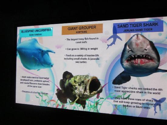 Aquaria KLCC: Sharks