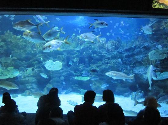 Aquaria KLCC: Amazing school of fishes