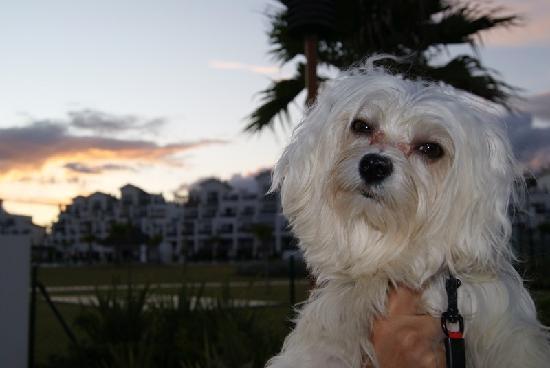 Hotel Fuerte Estepona: Admiten mascotas