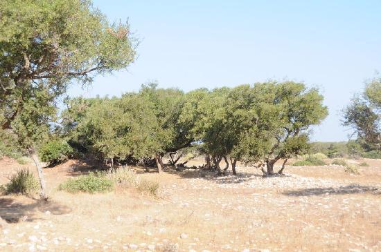 Ecotourisme et Randonnées: Arganiers