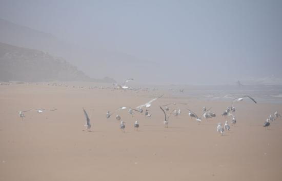 Ecotourisme et Randonnées: Plage déserte.