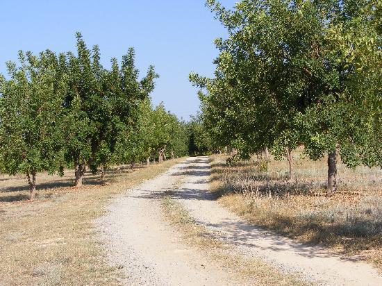 Quinta Arruba Guest House: Avenue of Carob trees to villa