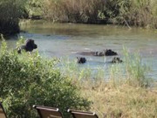 Sabie River Bush Lodge: Guests viewing a sighting of a few hippo's from our deck