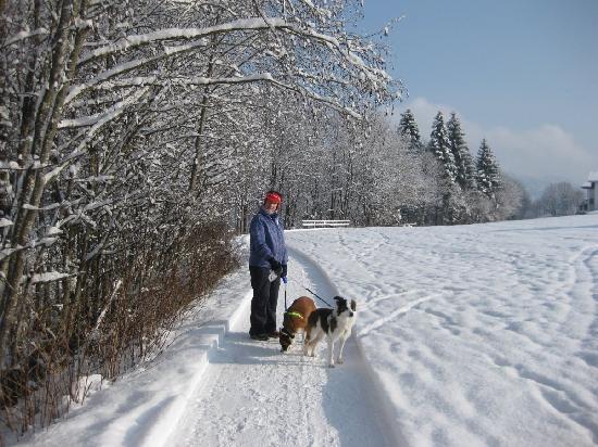 Hotel Wastlhof: Walking the dogs nearby