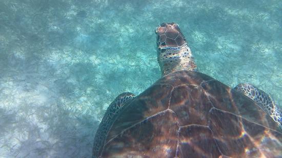 Local Quickies: Amazing Sea Turtles
