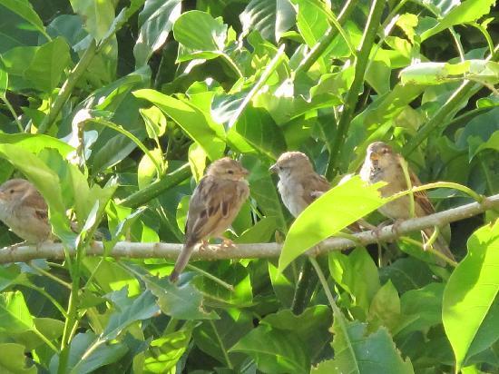 Le Jardin des Biehn: Les oiseaux