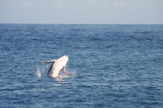 Le Nautile: le balene!!!!
